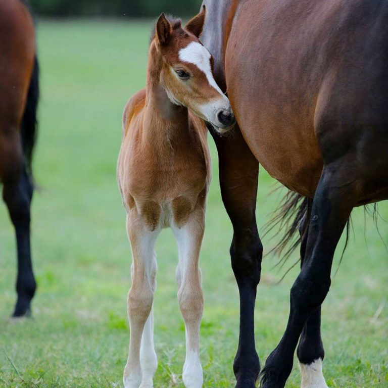 bangarang rc foal with mom