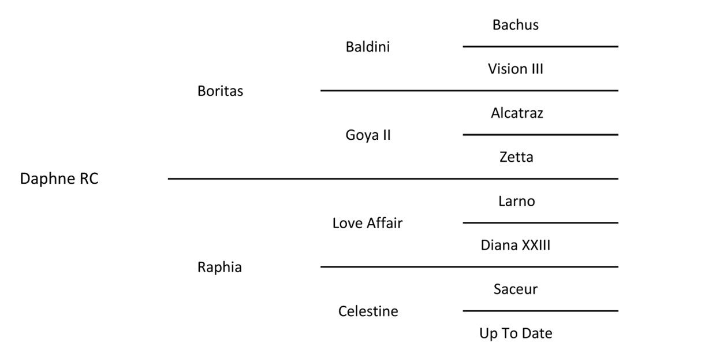 daphne rc pedigree