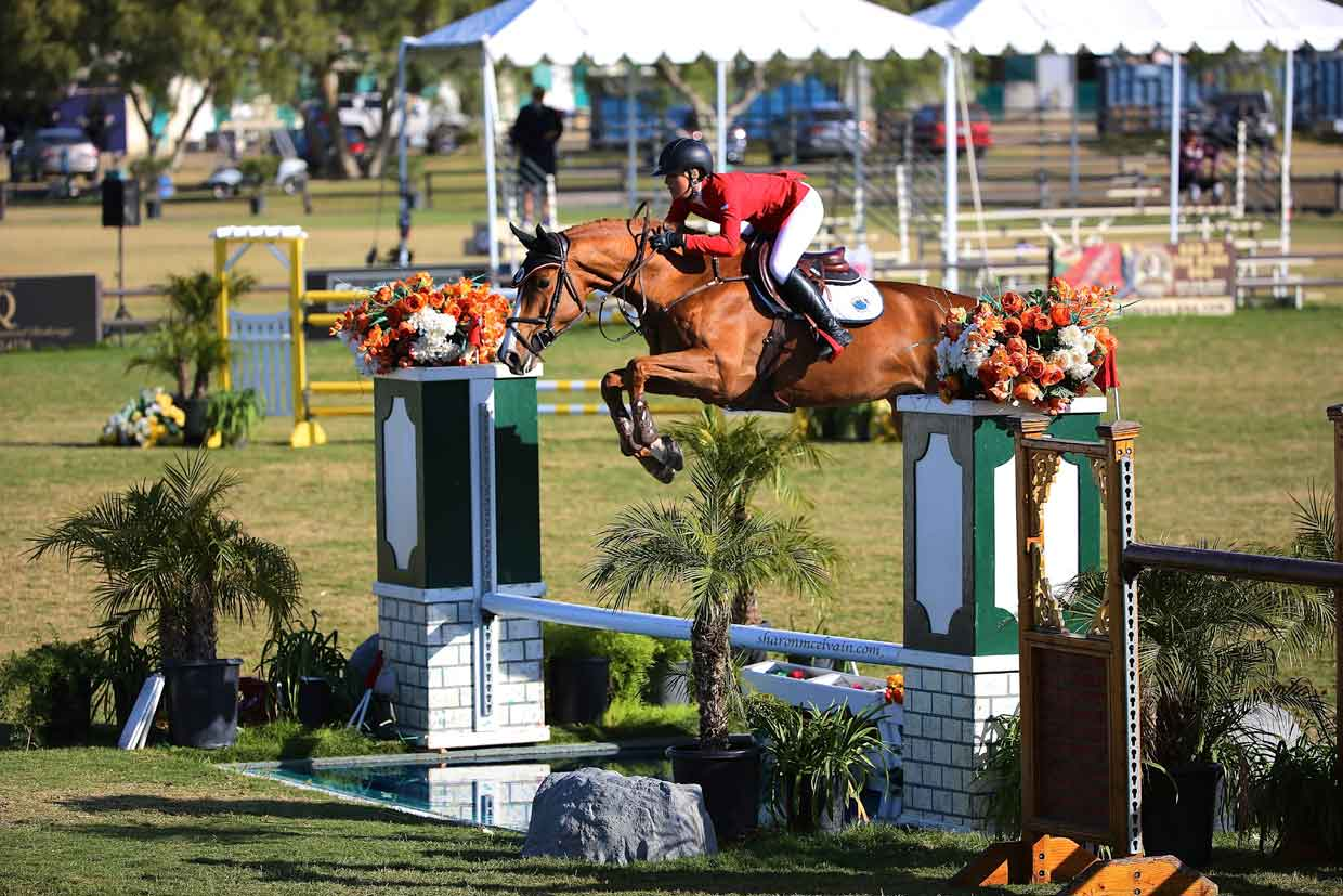 chenoa mcelvain jumping a bay holsteiner