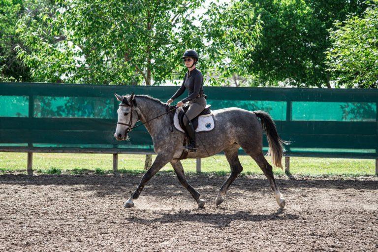horse training at rancho corazon photo credit brandon randall