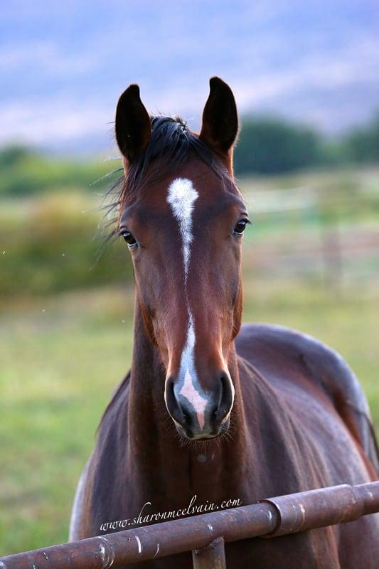 aboutus horse