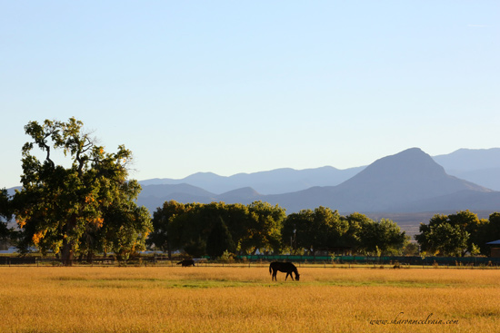 pasture view with horse grazing